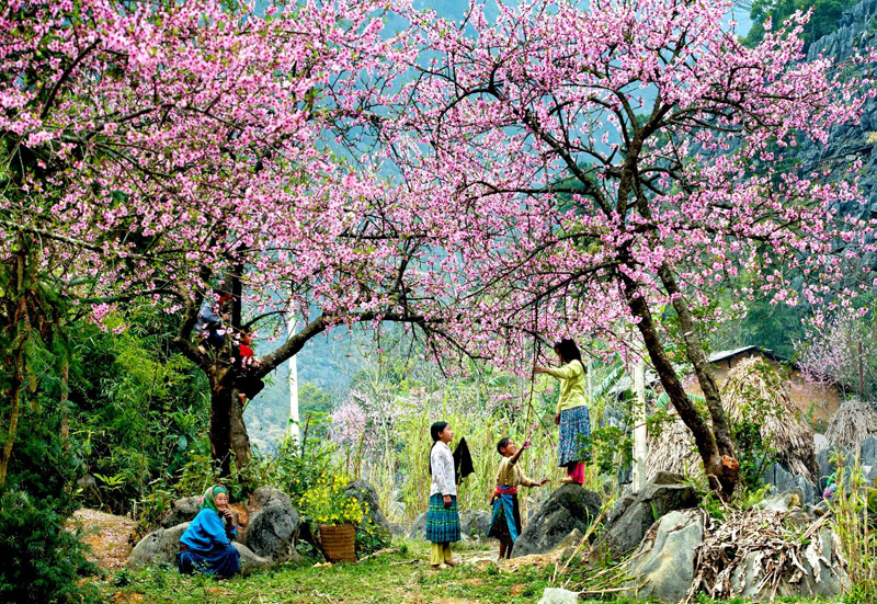 Moc Chau exploration in Colza or Peach blossom